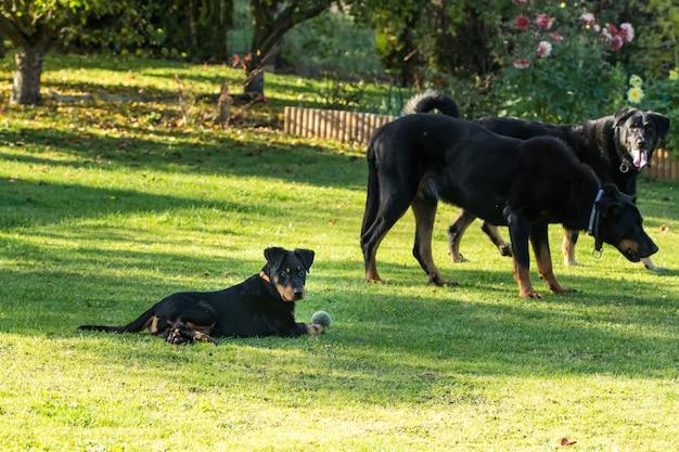 緑と花の咲く庭で2人の大きな大人と遊ぶ愛らしい若い羊飼い犬