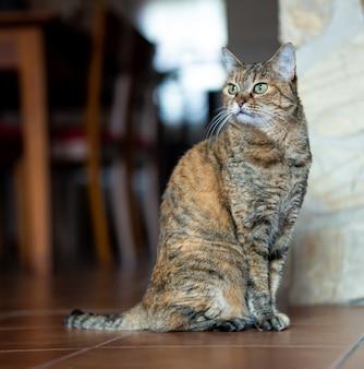 Взрослый кот сидит дома отдыха и смотрит в сторону.