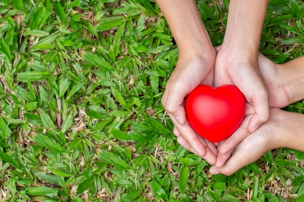 Adult and child hands holding red heart on the grass