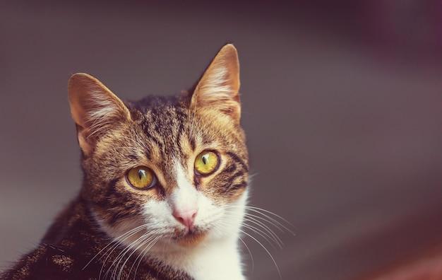 大人の飼い猫の肖像画をクローズ アップ