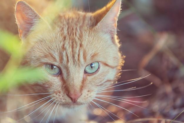 Взрослая домашняя кошка сидит в траве