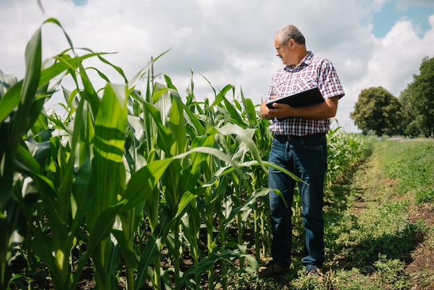 彼の農場の植物をチェックしている大人の農夫。農学者はトウモロコシ畑で錠剤を持ち、作物を調べています。アグリビジネスの概念。タブレットを持ってトウモロコシ畑に立っている農業技術者。