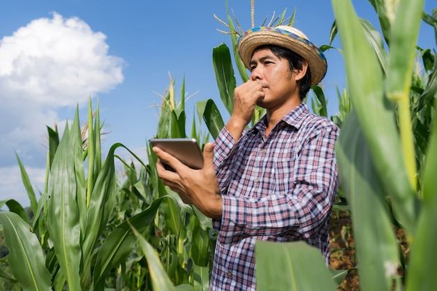 Adult farmer holding tablet in corn field under blue sky in summer