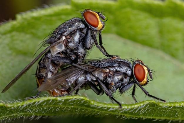 교미하는 석관과의 성충 살파리