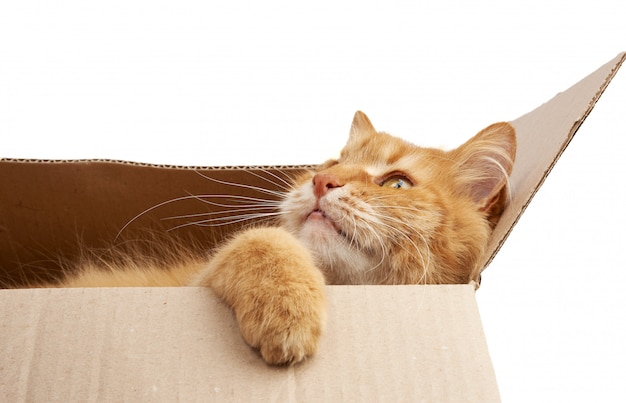 Adult ginger cat resting in a brown cardboard box