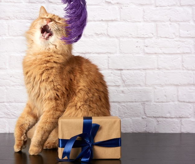 Adult ginger cat with open mouth and box with a gift