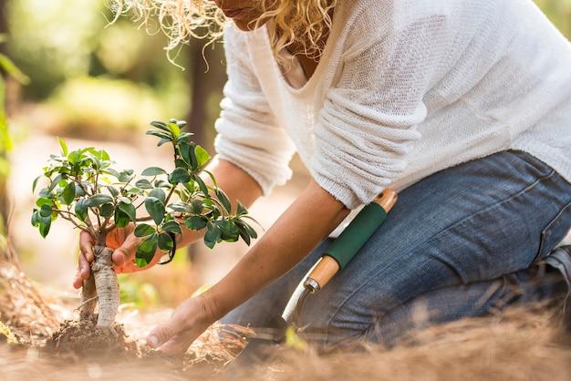 Взрослая дама сажает новое дерево на землю в лесу