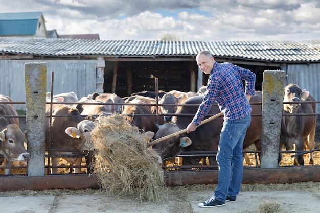 Взрослый мужчина кормит коров сеном на небольшой ферме