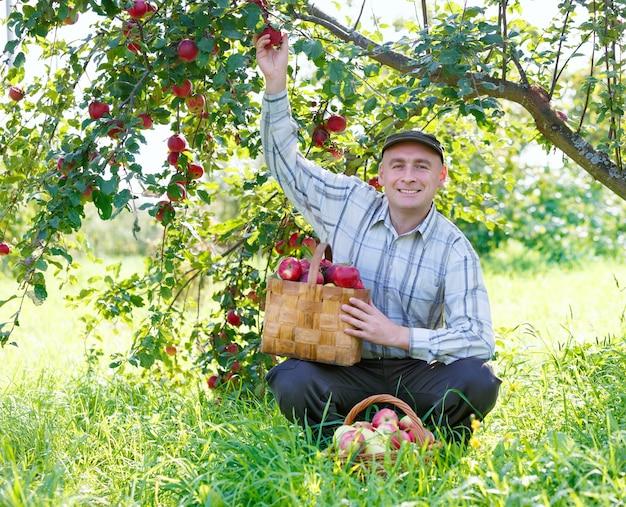 庭のリンゴの収穫に座っている大人の男