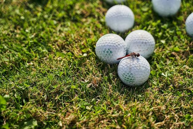 Взрослая красная стрекоза сидит на множестве мячей для гольфа, разбросанных на залитой солнцем зеленой траве