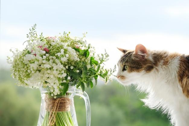 Adult tricolor domestic cat smelling flowers, springtime