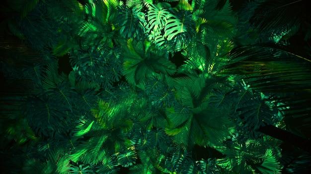 자연의 정글 여름 모험 및 장식 개념의 광고 장면 3d 렌더링