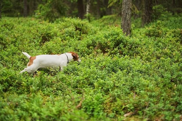 Adventure puppy runs through the forest