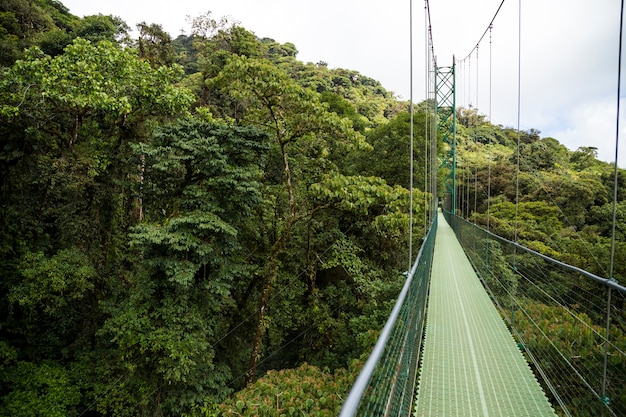Adventure suspension bridge in rain forest at costa rica