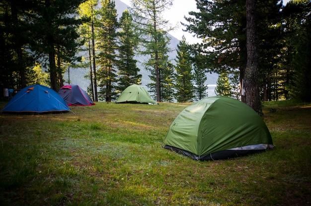모험 아침과 일몰 소나무 숲 공원에서 야외 물 근처 소나무 숲 아래 캠핑 및 텐트,