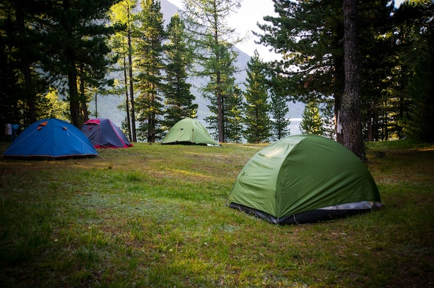Adventures camping and tent under the pine forest near water outdoor in morning and sunset pine forest park,