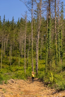 An adventurous hiker walking along a path next to some pine trees, hiking lifestyle, copy and paste space, forests of the basque country