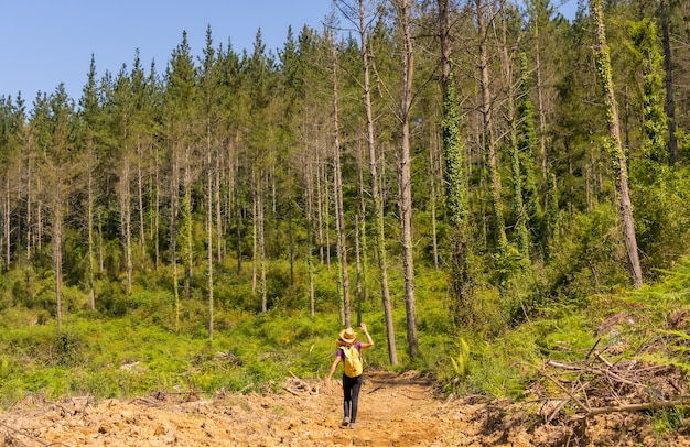 An adventurous hiker walking along a path next to some pine trees