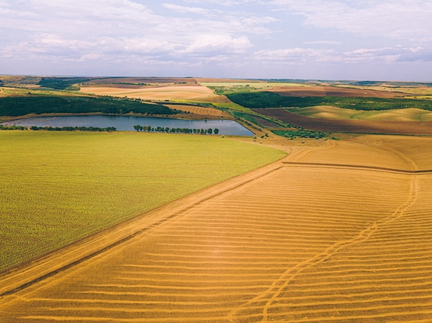 Воздушный дрон фото удивительного пейзажа с культурами и озером, концепция сельского хозяйства.