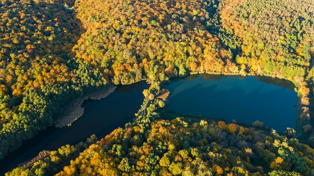 Aerial drone view of forest with yellow trees and beautiful lake landscape from above, kiev, goloseevo forest, ukraine