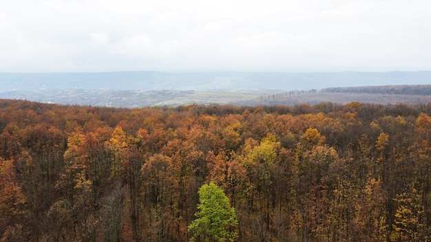 Aerial drone view of nature in moldova, yellowed forest, hills, cloudy sky