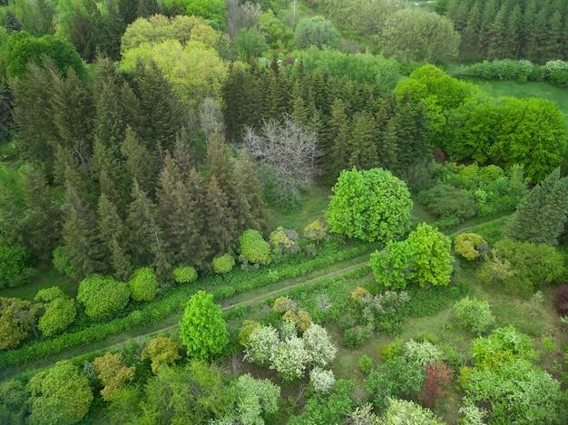 Воздушный беспилотный вид на сад с дорожками, разными деревьями и зеленой травой.
