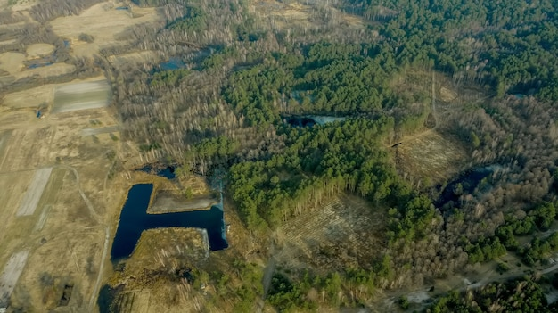 Воздушный беспилотный вид обезлесения соснового леса. засуха дерева дерева изменения концепции экологии и освежение леса.