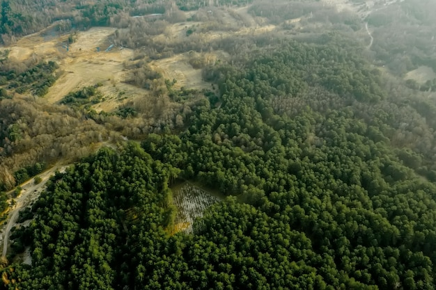 松林の森林破壊の空中ドローン ビュー