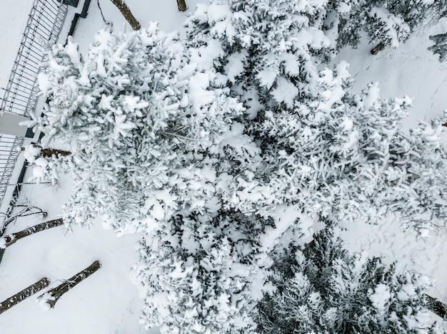 시원한 겨울날 눈으로 덮인 소나무와 잎 숲의 공중 무인 항공기 보기 b