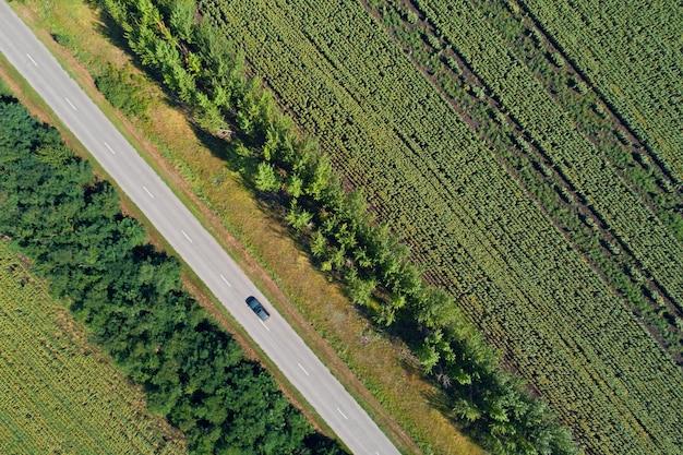 벗겨진 해바라기 밭의 공중 무인 항공기보기는 숲과 고속도로로 나뉩니다.