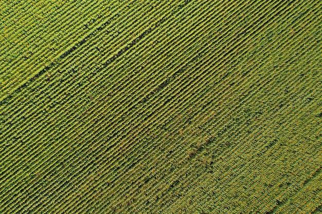 해바라기 밭, 녹색과 노란색 줄무늬의 공중 무인 항공기보기