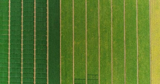 収穫時にわら俵のある畑の上空を飛行します。大豆、ヒマワリ、トウモロコシまたはトウモロコシ。