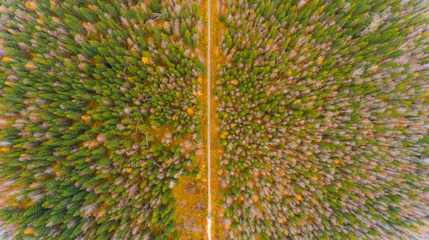 Aerial forest view at autumn time with good weather