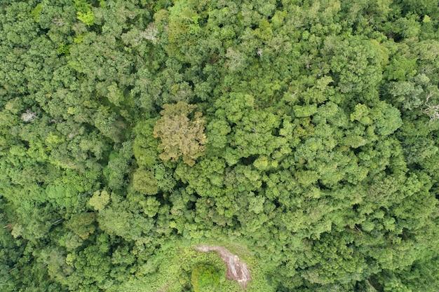 공중 높은 각도 보기 위에서 아래로 열대우림 나무. 풍부한 열대 우림 생태계와 건강한 환경 배경 아름다운 이미지는 배경과 웹사이트를 위한 놀라운 자연입니다. 프리미엄 사진