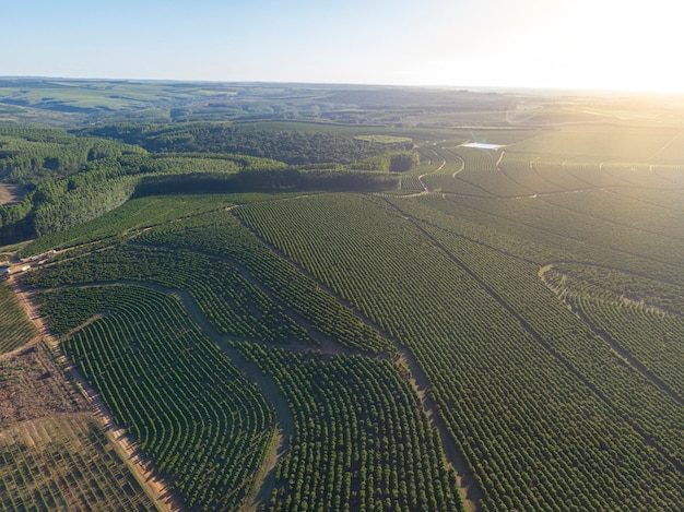 ブラジルのコーヒー農園の航空写真。