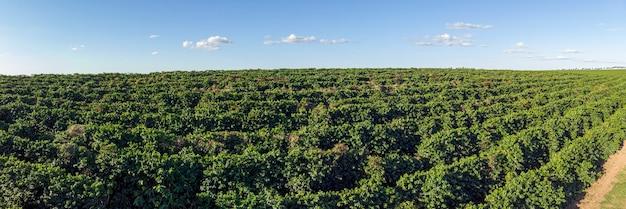 Аэрофотоснимок кофейной плантации в бразилии.