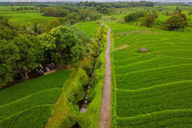 Aerial landscape paddy fields in indonesia with amazing pattern of fields in road