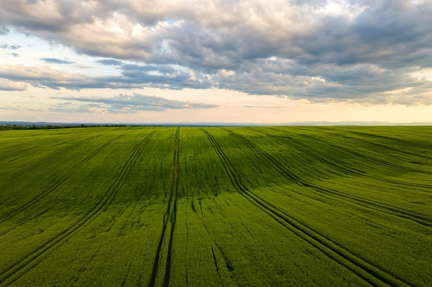 Aerial landscape view of green cultivated agricultural fields with growing crops on bright summer day.