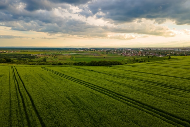 Aerial landscape view of green cultivated agricultural fields with growing crops on bright summer evening.