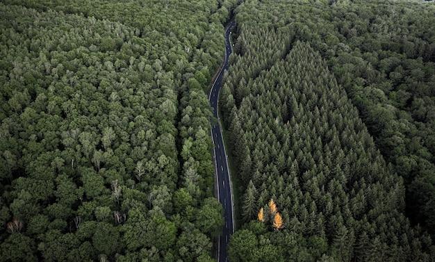 Завораживающий вид с воздуха на дорогу, окруженную густым лесом
