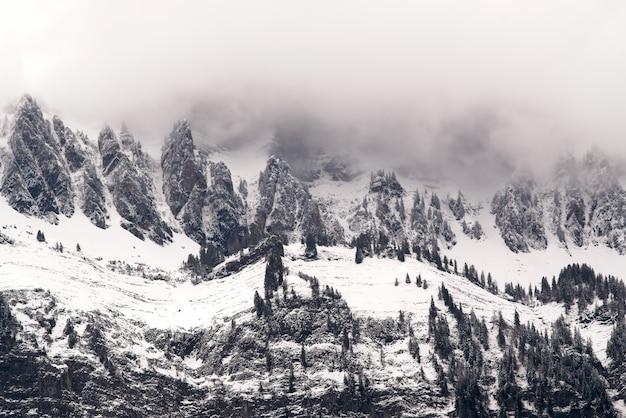 雪に覆われた森の空中写真