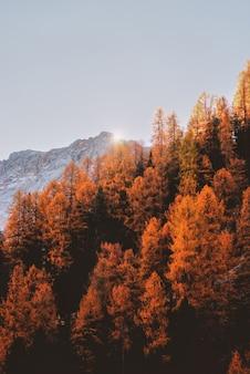 Антенна апельсиновых деревьев