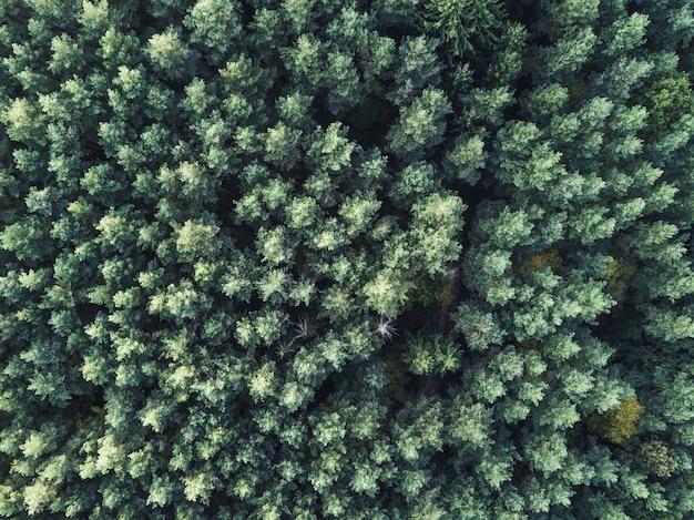 Ripresa aerea aerea di una bella fitta foresta verde