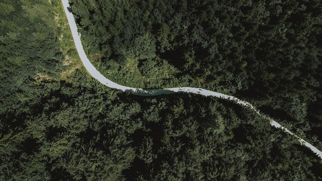 Aerial overhead shot of a long road leading through dense green trees