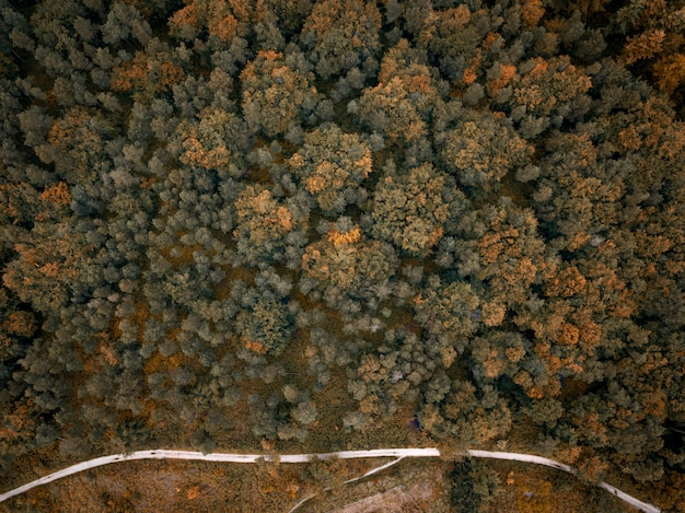 Aerial overhead shot of orange and green trees next to a road
