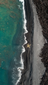 Aerial overhead vertical shot of the coastline of the sea with amazing waves and a palm tree