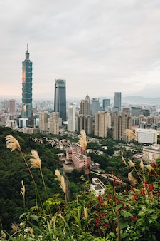 Aerial panorama over downtown taipei with taipei 101 skyscraper with trees on the mountain and grass flowers in foreground in the dusk from xiangshan (elephant mountain).