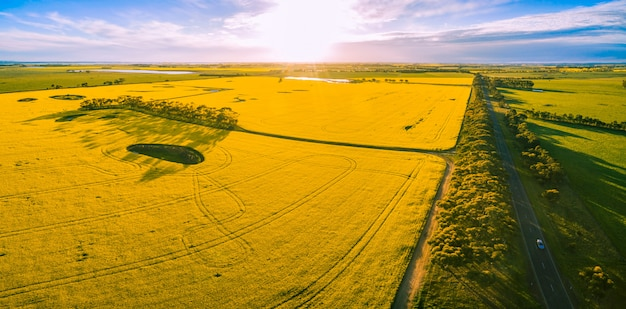 Aerial panorama of yellow canola fields at sunset
