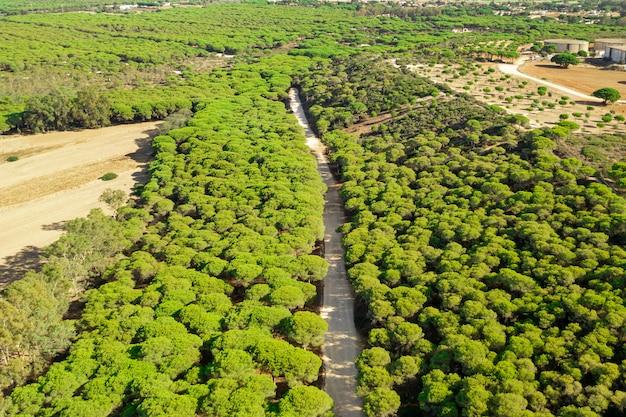 森の中の道路の空中パノラマ風景