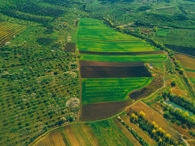 田園地帯の作物や木々のあるフィールドの鳥瞰図からの空中写真